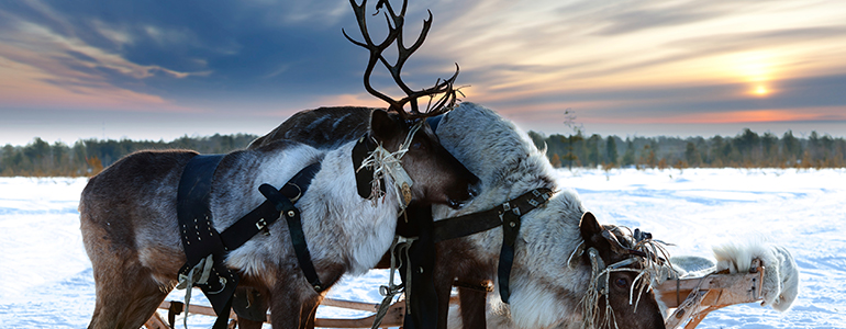 Lapland Holiday
