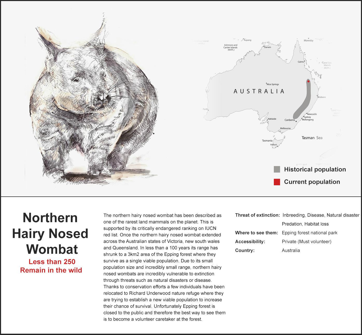 Photos amazing nosed northern hairy vombatidae wombat